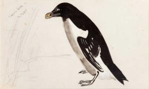 Raymond Bigot - Le pingouin Torda